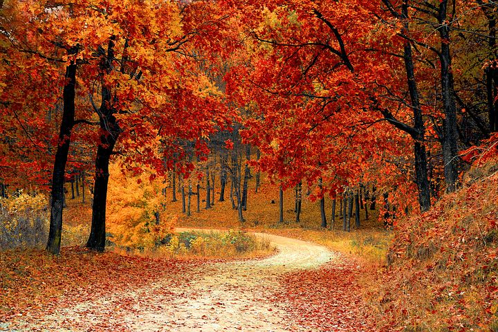 8 reasons to get excited about Autumn