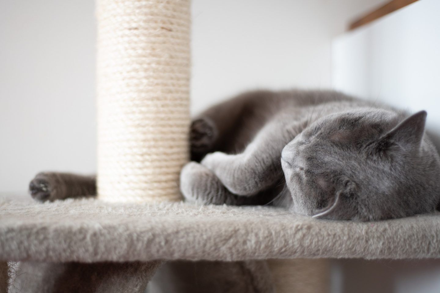 AD: Ideas for Christmas gifts for pets - cat on scratching post