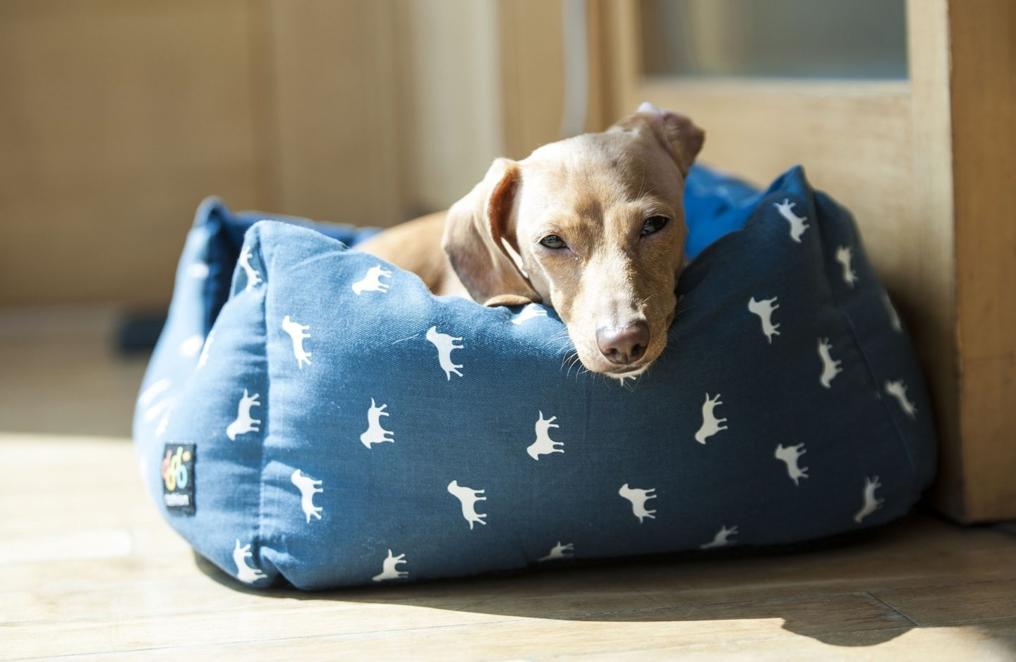 AD: Ideas for Christmas gifts for pets - dog on bed