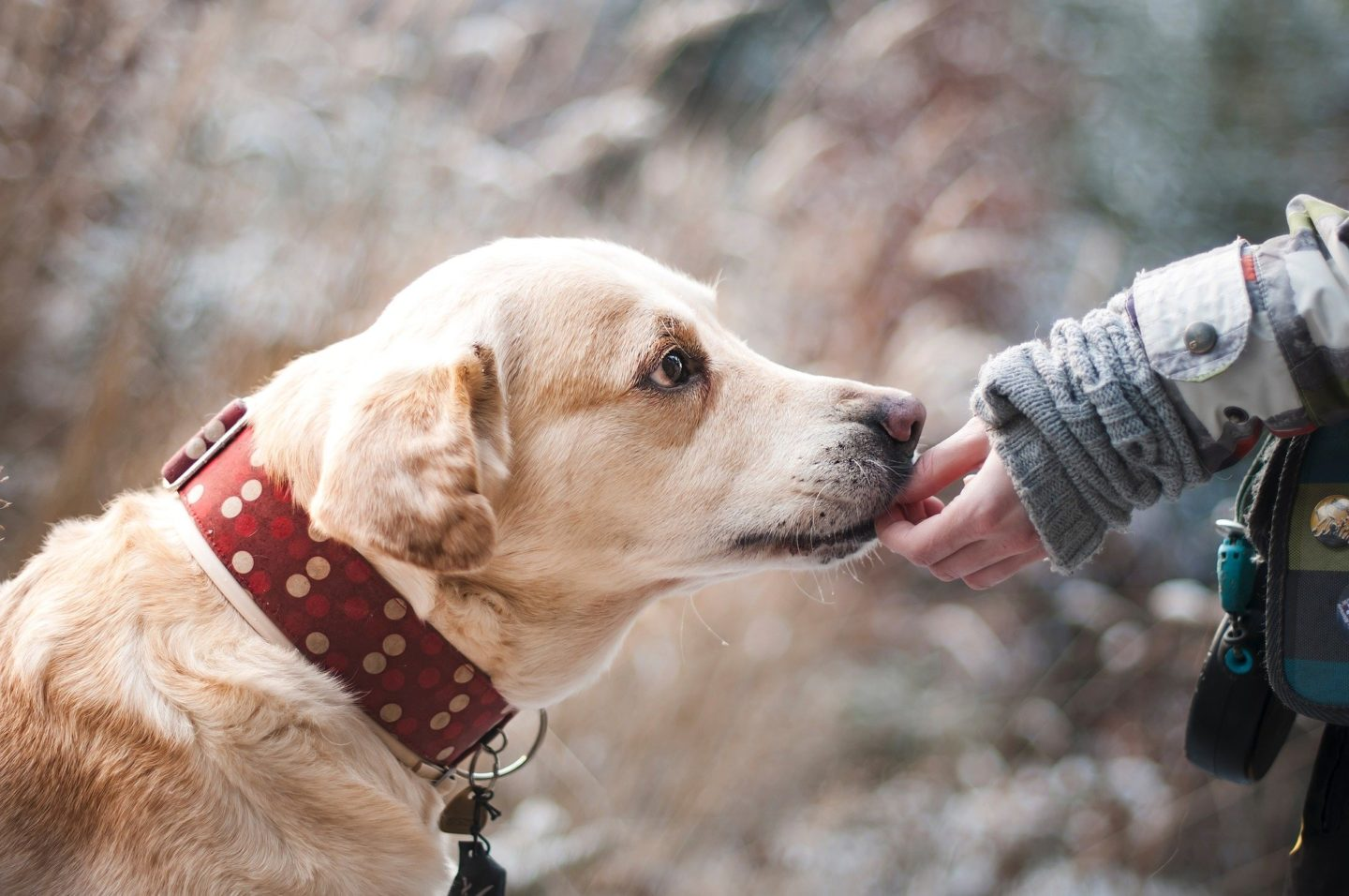 AD: Ideas for Christmas gifts for pets - dog getting a treat.