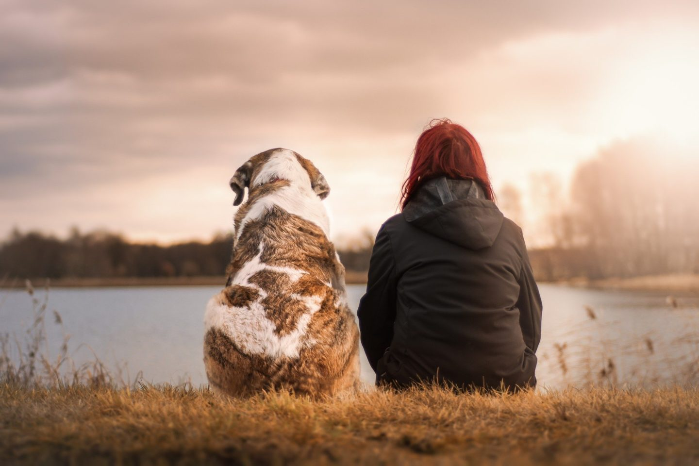 AD: Ideas for Christmas gifts for pets - woman and dog