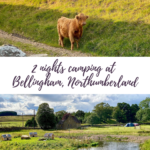 Image of a cow and a pond with the text '2 nights camping at Bellingham, Northumberland