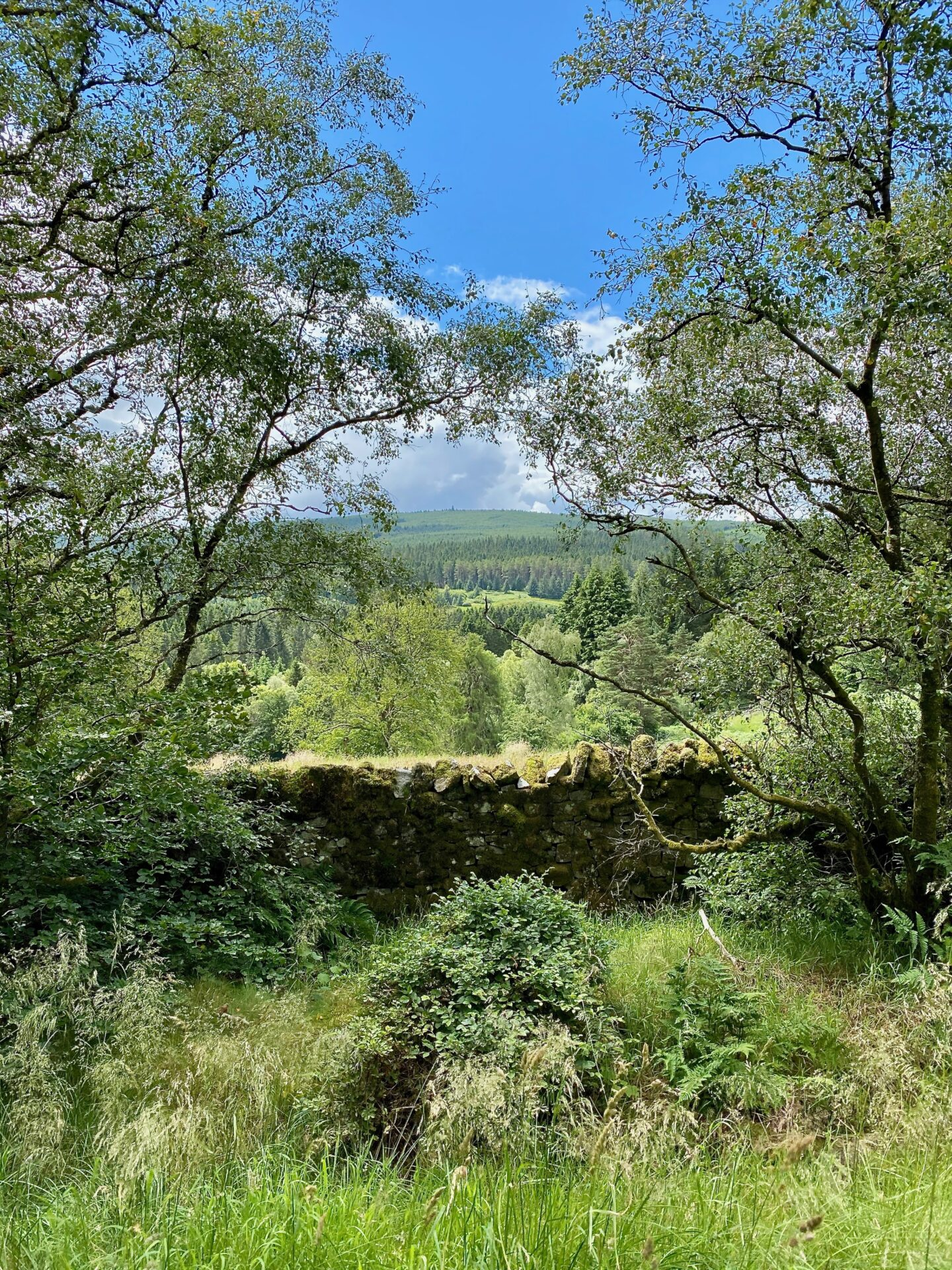 A picturesque view of a stone wall and trees