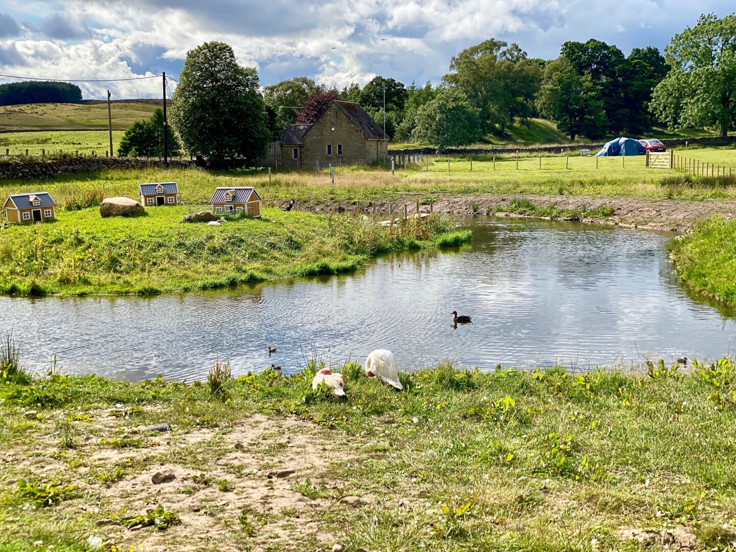 A pond with ducks on a campsite