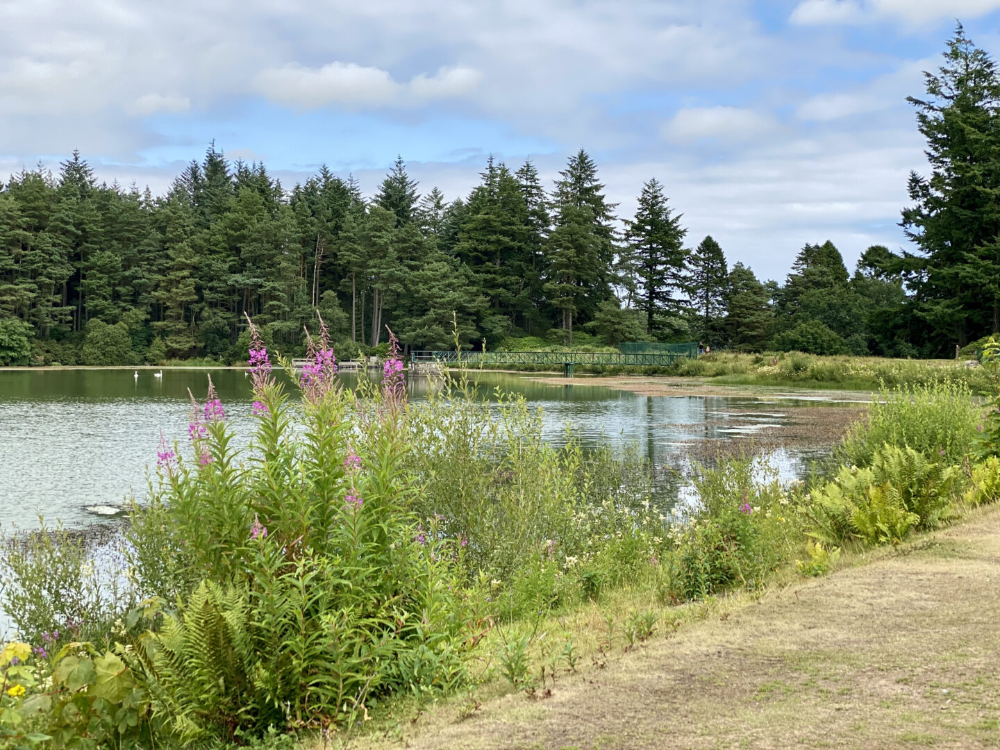 Crombie Park loch with fireweed and trees