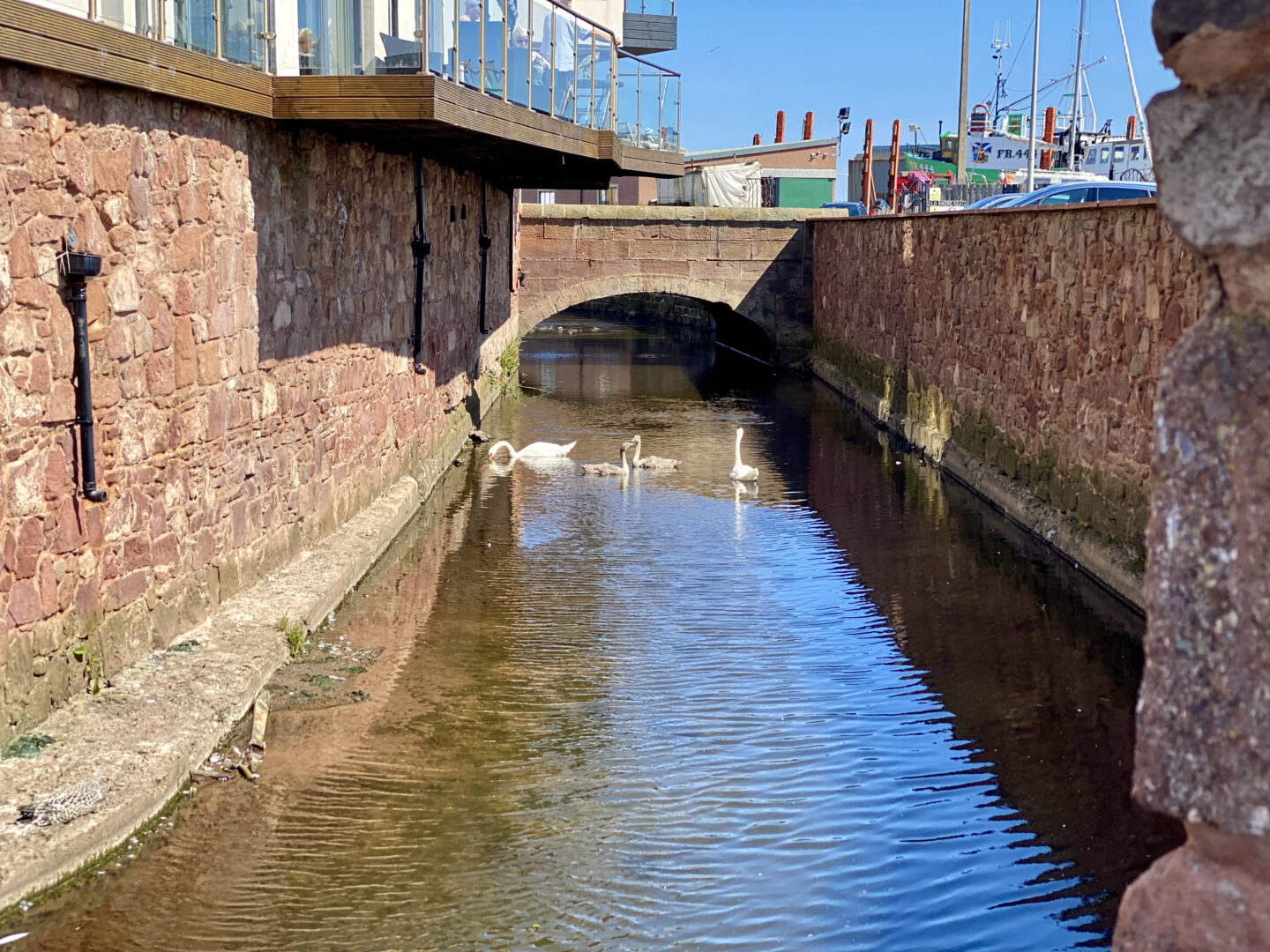 Some swans at the canal at Arbroath Harbour